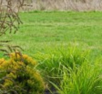 Calamagrostis x acutiflora 'Eldorado' 15