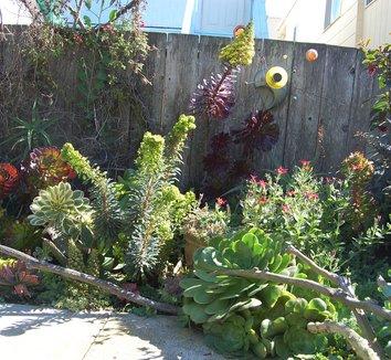 Euphorbia 'Tiny Tim' PP16930 6 landscape