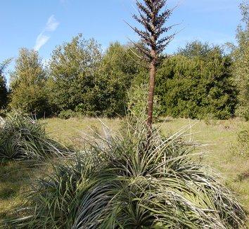 Puya berteroniana 1 flower, form