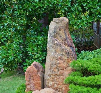 Magnolia grandiflora 17 landscape