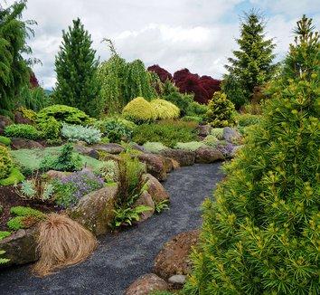 thuja plicata 39 grune kugel 39 plant lust. Black Bedroom Furniture Sets. Home Design Ideas