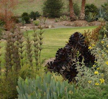 Aloe plicatilis 18