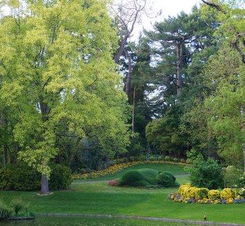 Liriodendron tulipifera 'Aureomarginatum' 10 form