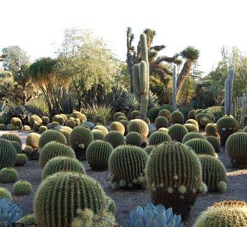 Echinocactus grusonii 1 form
