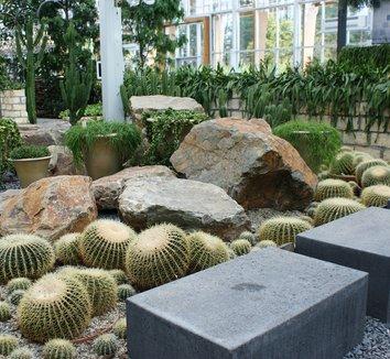 Echinocactus grusonii 19