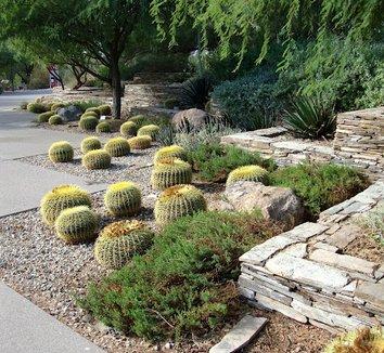 Echinocactus grusonii 20 landscape