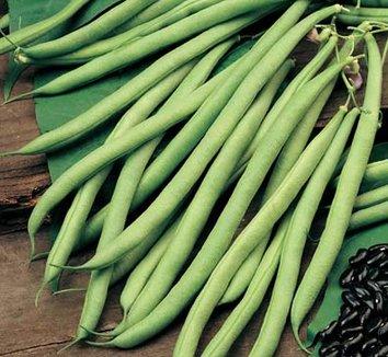 Bean 'Cobra' 1 bean