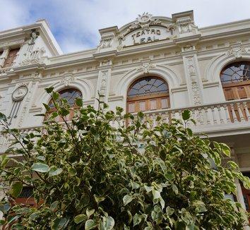 Ficus benjamina 'Variegata' 9