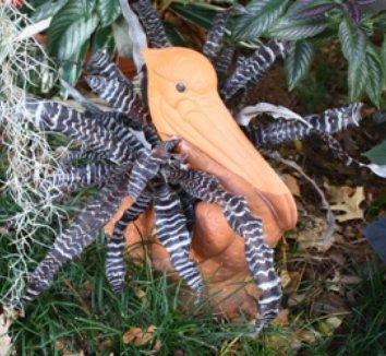 Cryptanthus 'Zebrina' 3