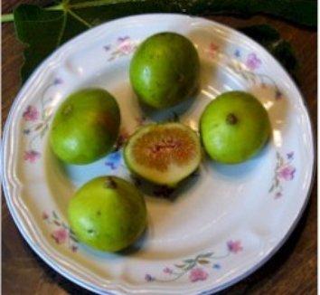 Ficus carica 'LSU Gold' 1