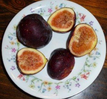 Ficus carica 'Purple Passion' 1