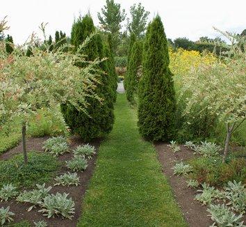 Salix integra 'Hakuro Nishiki' 8 form