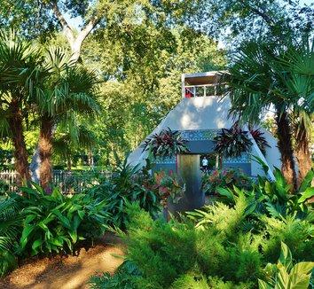 Trachycarpus fortunei 25 landscape