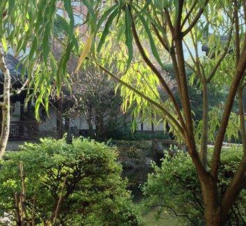 Metapanax delavayi 25 landscape