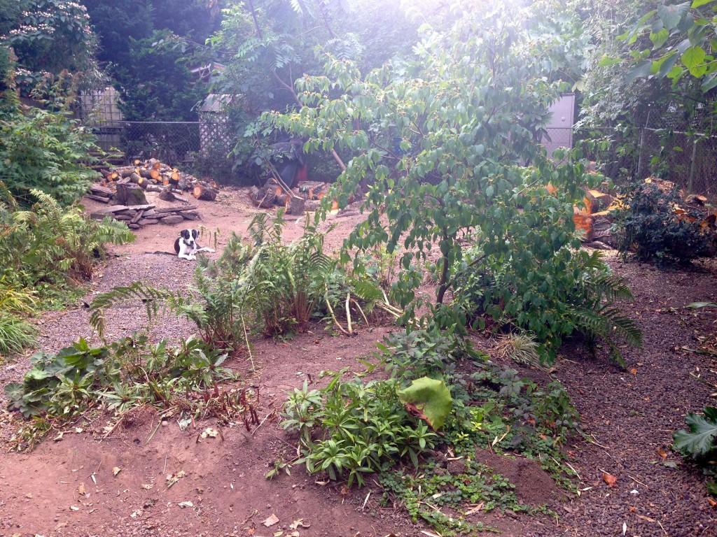 2014 back yard disaster