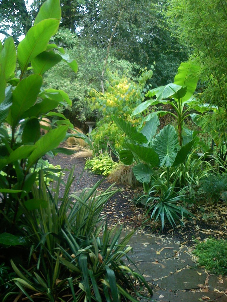 The garden in 2007 using the big leaves trick
