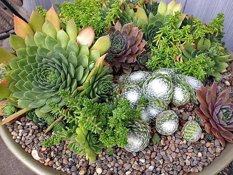Sedum-Sink-planting_Web
