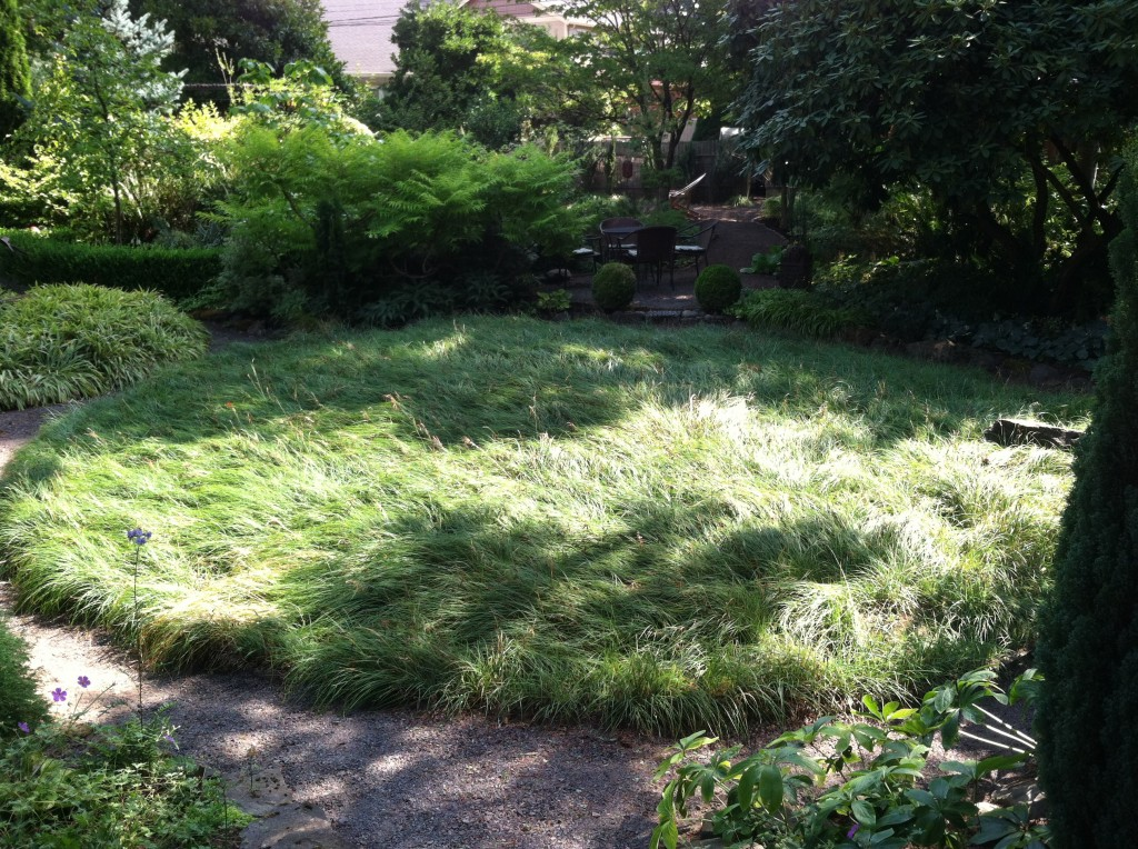 Vanessa Gardner Nagel's sedge circle, Carex flacca.