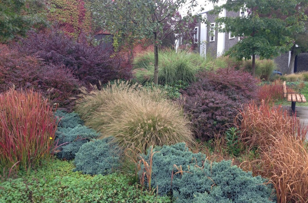 Musings on Miscanthus