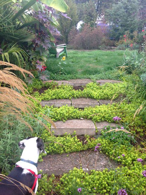 garden 2 - pokey