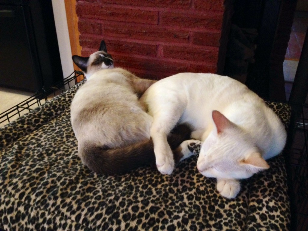 Mister Kitty & Posy