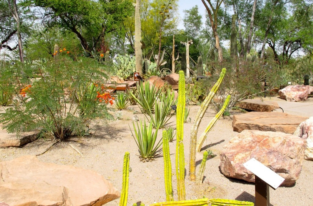 Cholla and the Chocolate Factory: Part Two