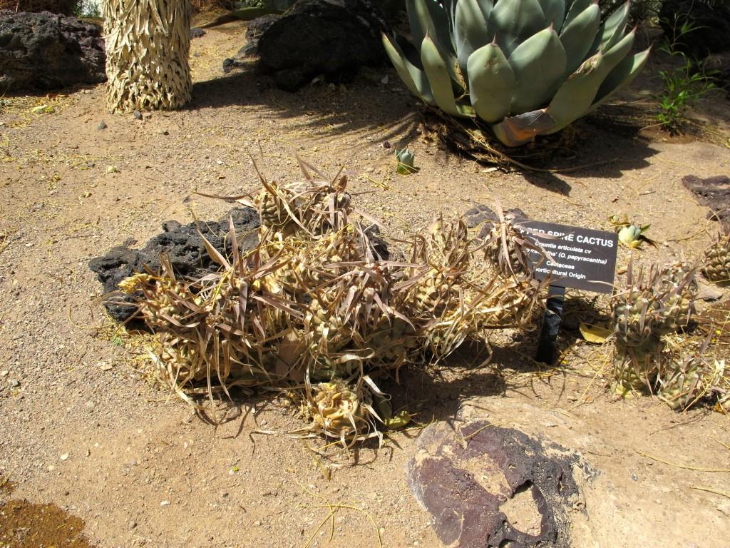 paper spine cactus