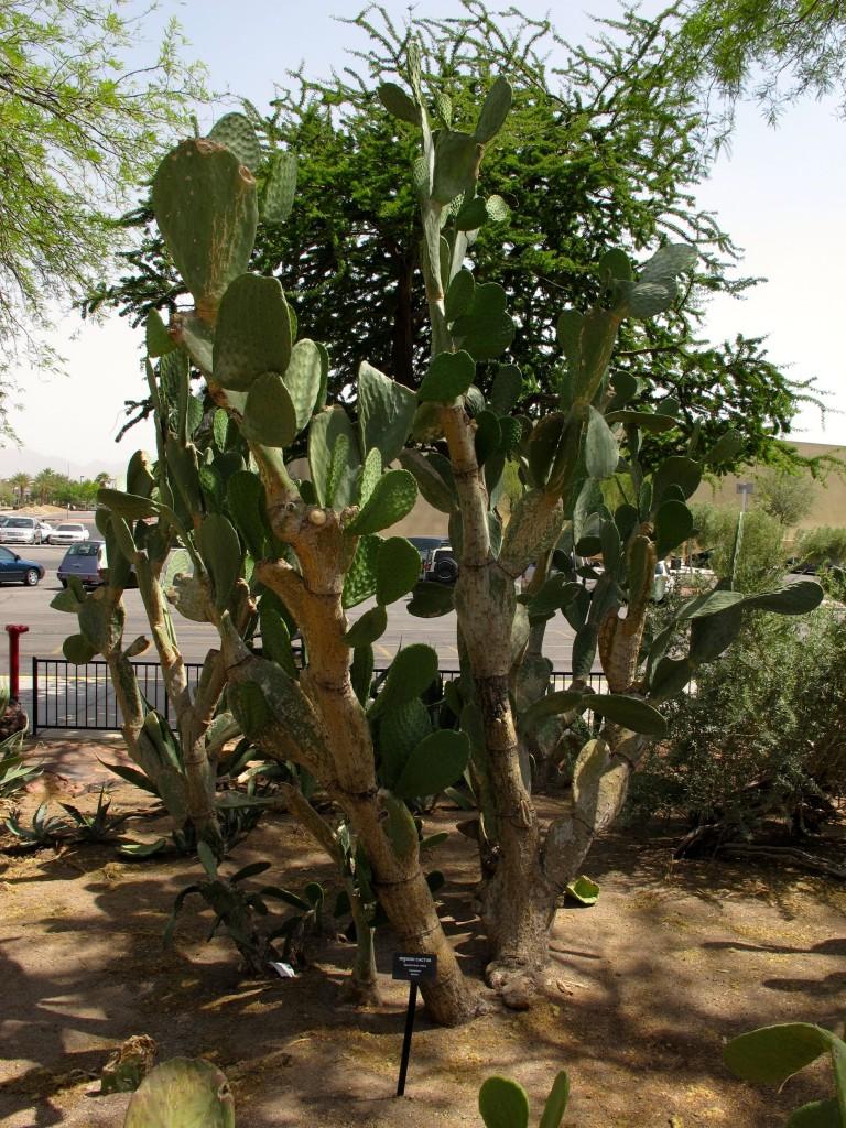 mission cactus