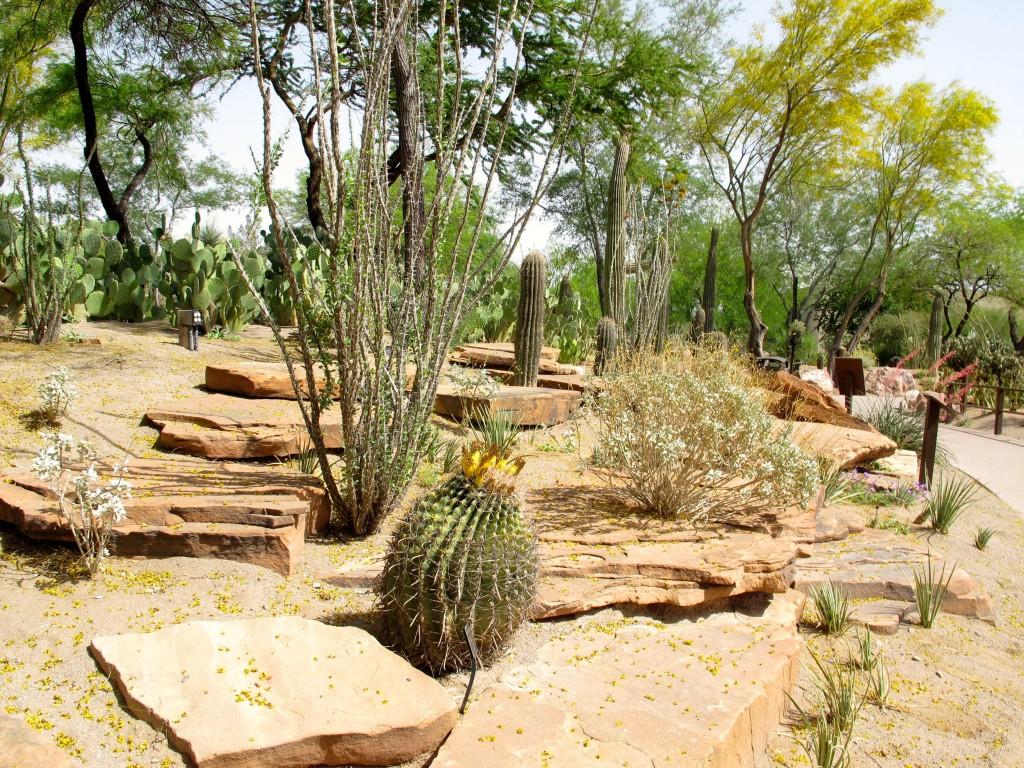 ferocactus hamatacanthus var hamatacanthus