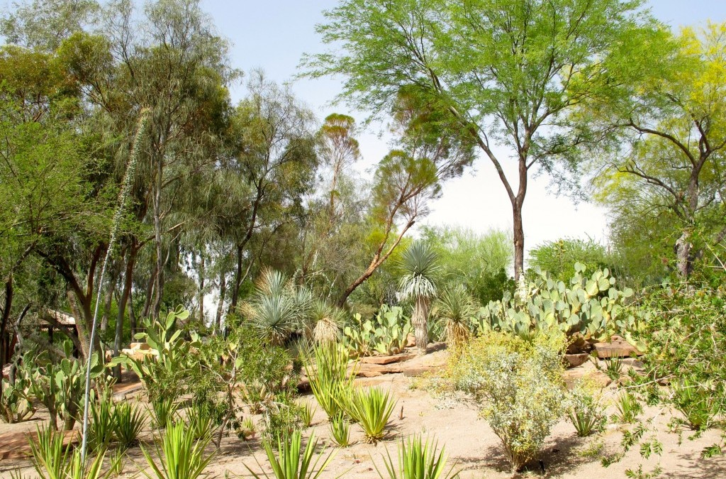 Cholla and the Chocolate Factory: Part One