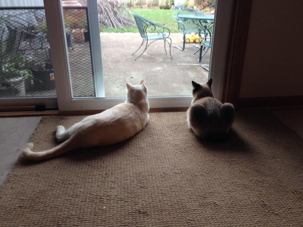 kitties watching birdies