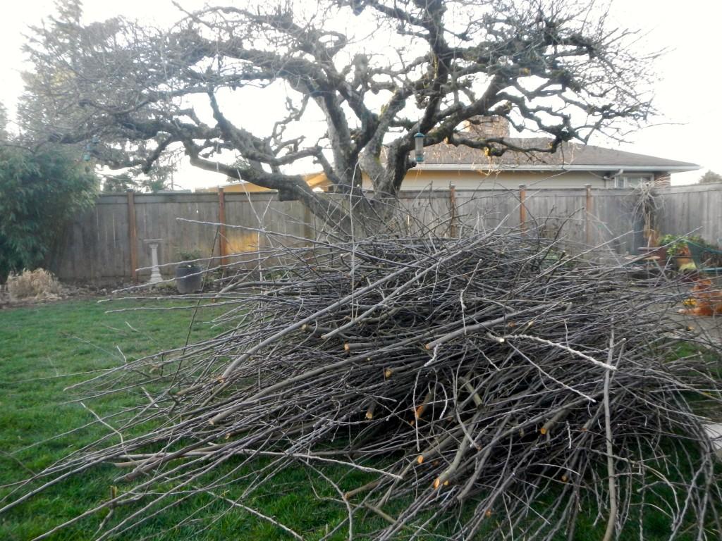 apple tree improvement