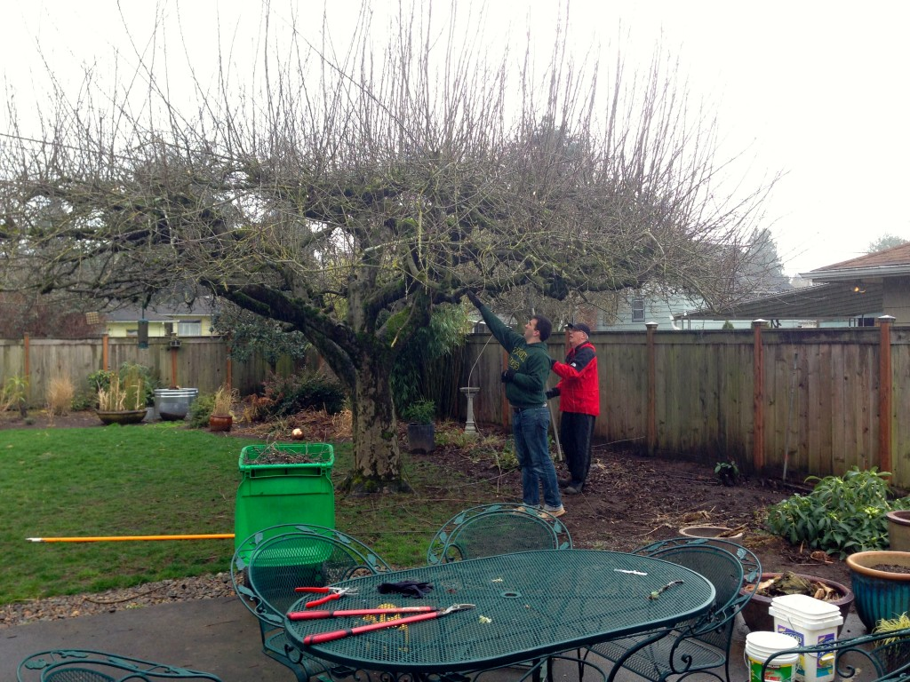 tree trimming teamwork