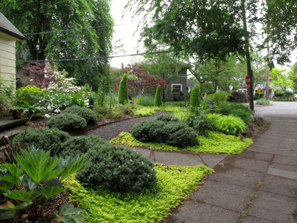 golden groundcover garden