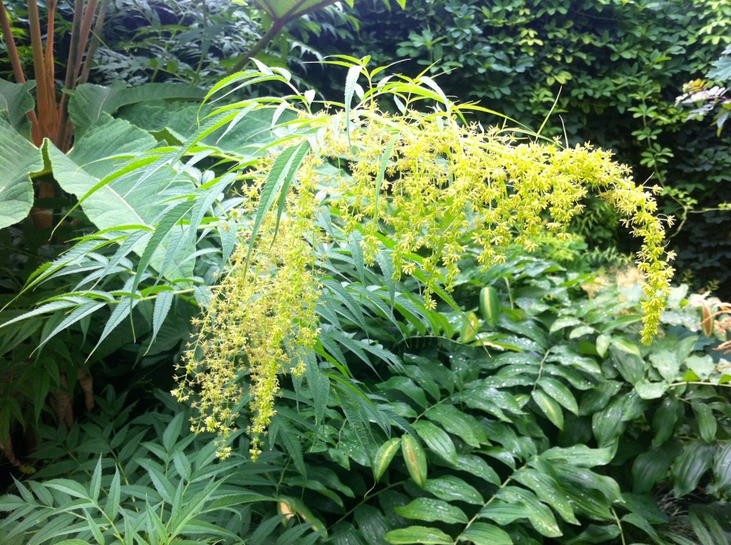 false hemp flower green 2
