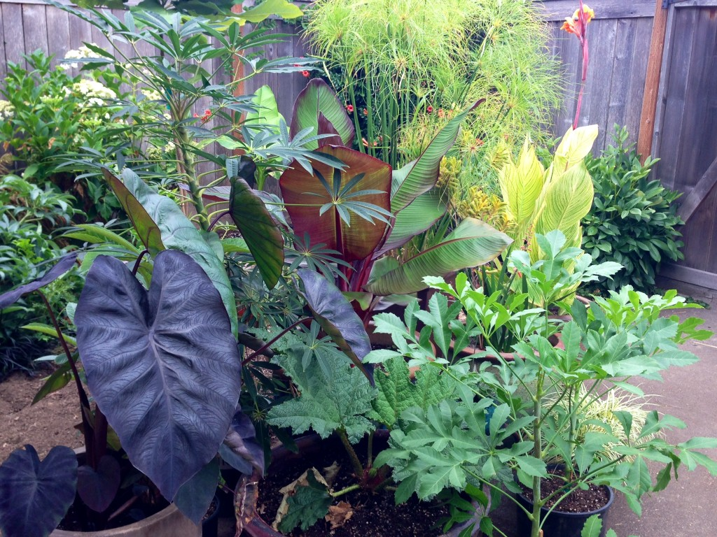 potted tropical-looking for the summer garden