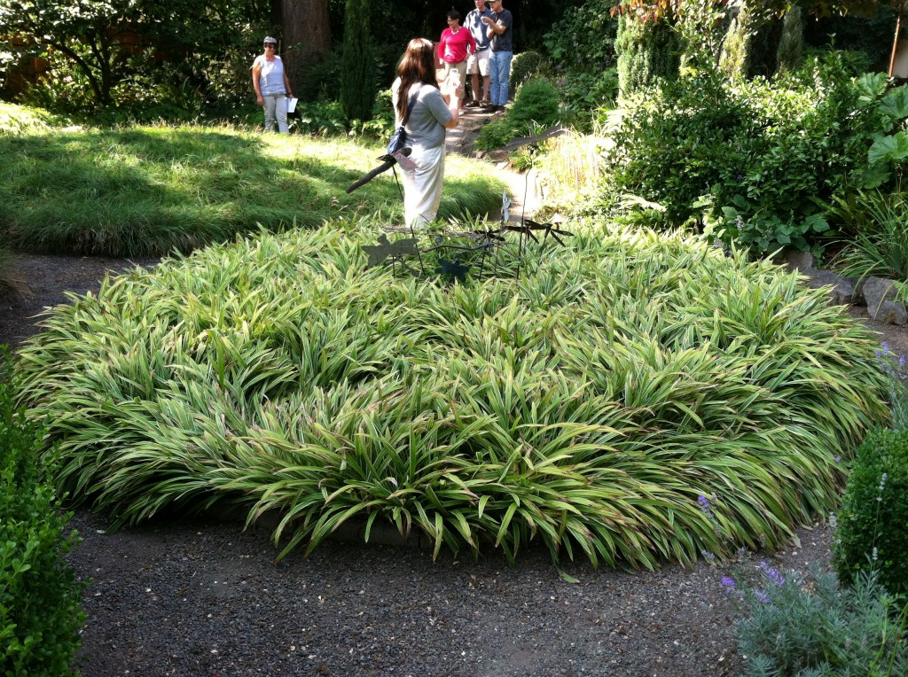 Side-by-side beds of carex in Vanessa Nagel Gardner's garden.