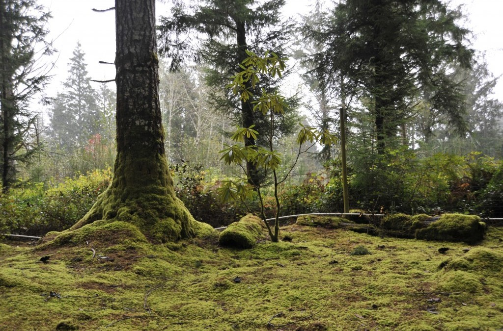 A few good moss imposters