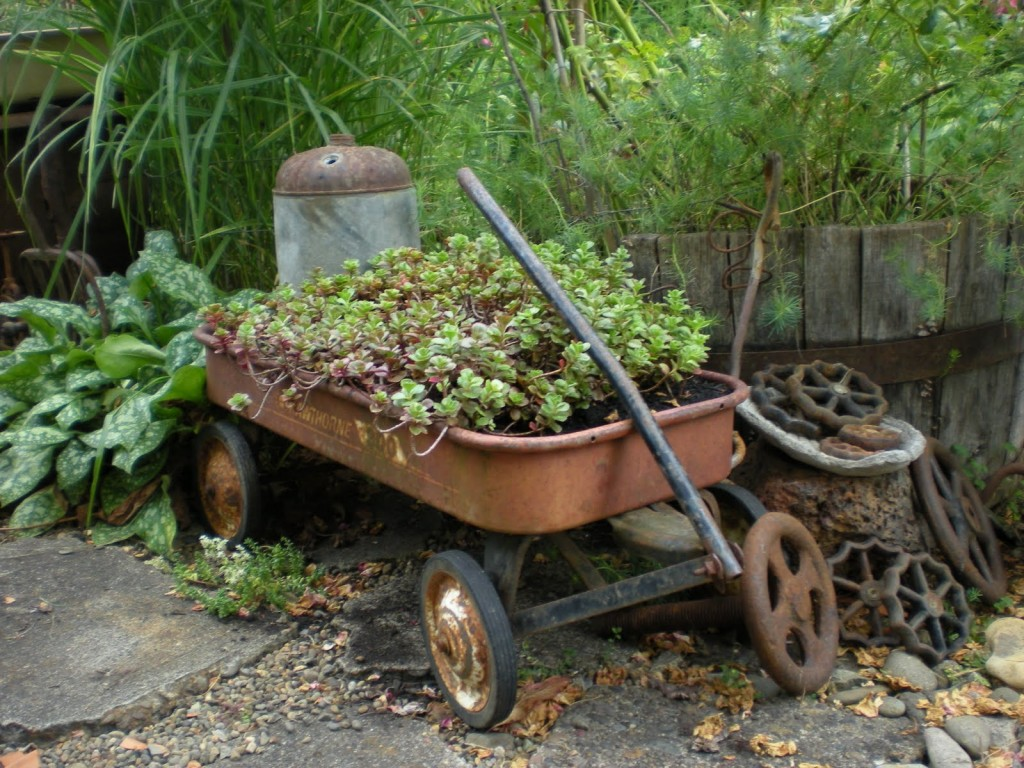 An old wagon rusted to perfection is filled with Sedum spurium in Grace's garden. Photo from Gardening with Grace.