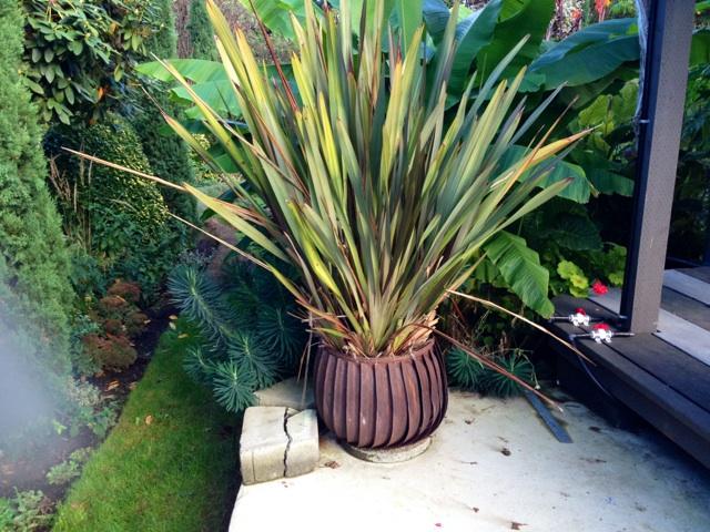 Fan Planter with Phormium