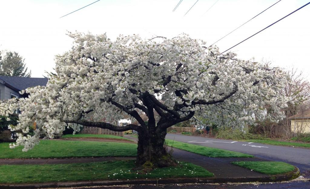 Random spring sightings…