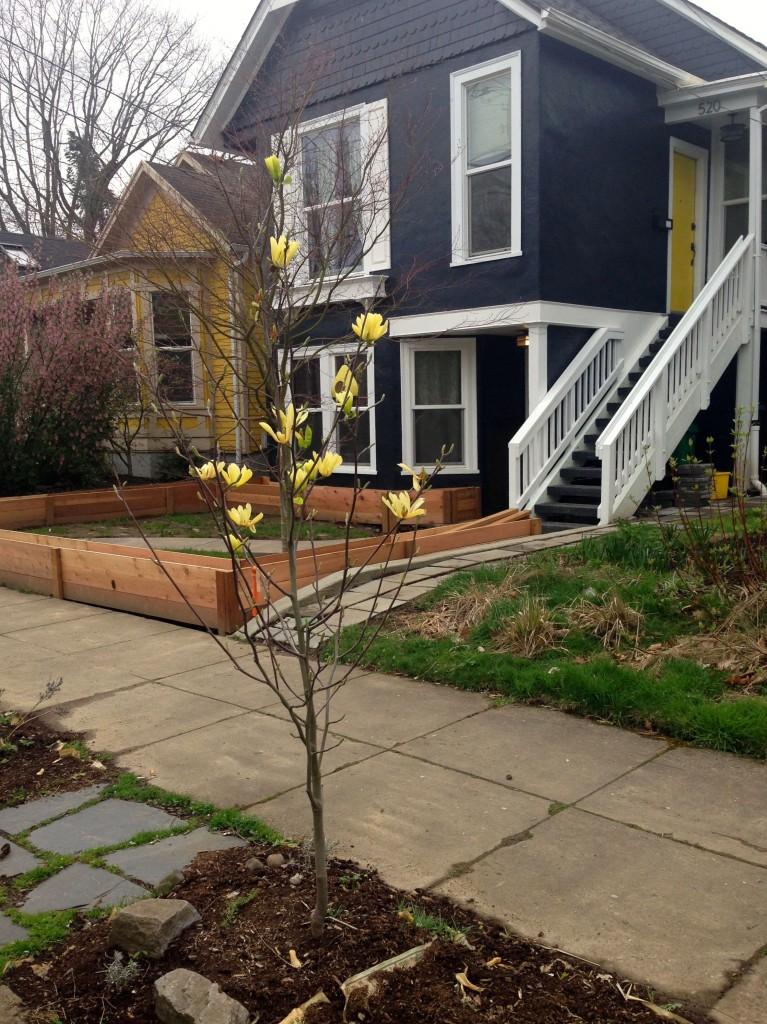 magnolia butterflies house doors birdfeeder echo2