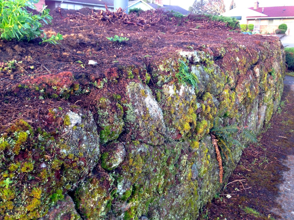 Moss Covered Lava Rock -- the long view