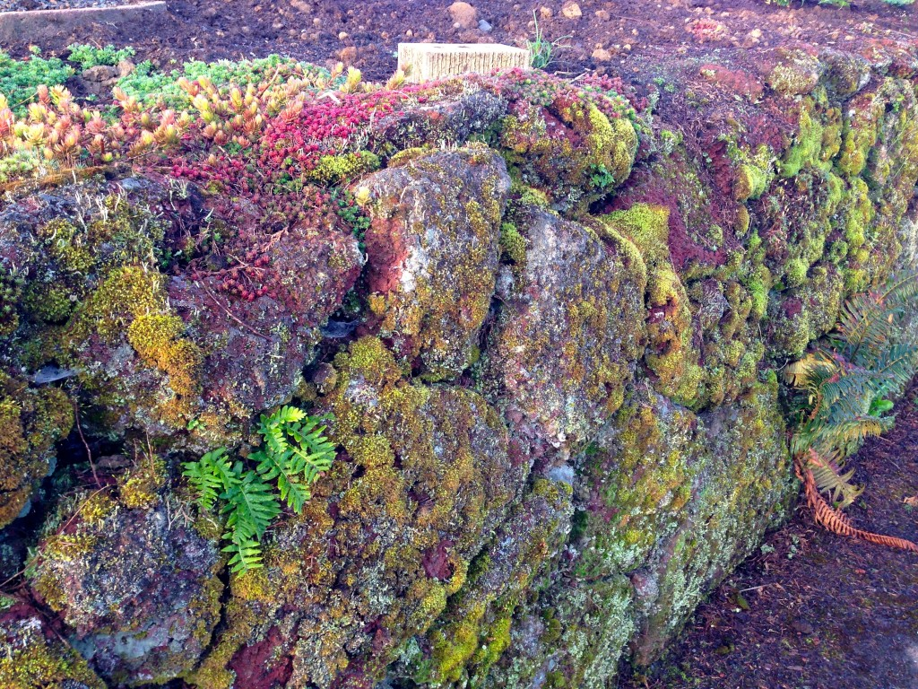 Moss Covered Lava Rock