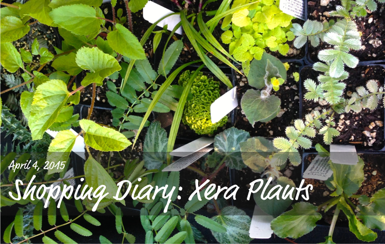 April Plant Shopping at Xera Plants