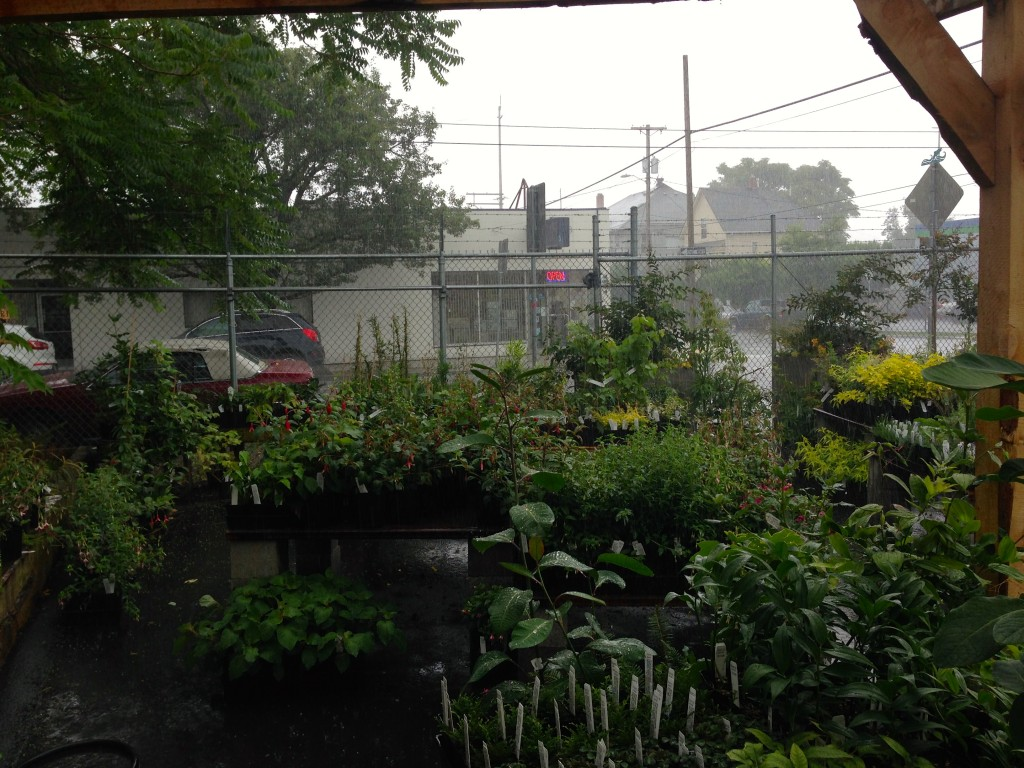 Xera Nursery in the Rain-- last season. We could use some days like this now.