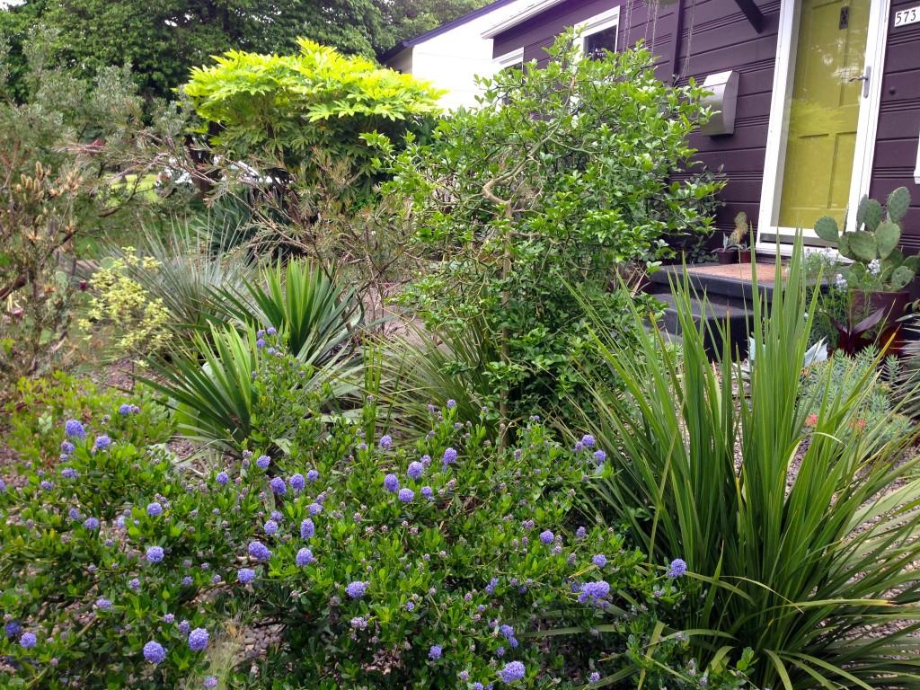 Danger Garden front yard. I'm close enough to stalk, I mean walk by regularly.