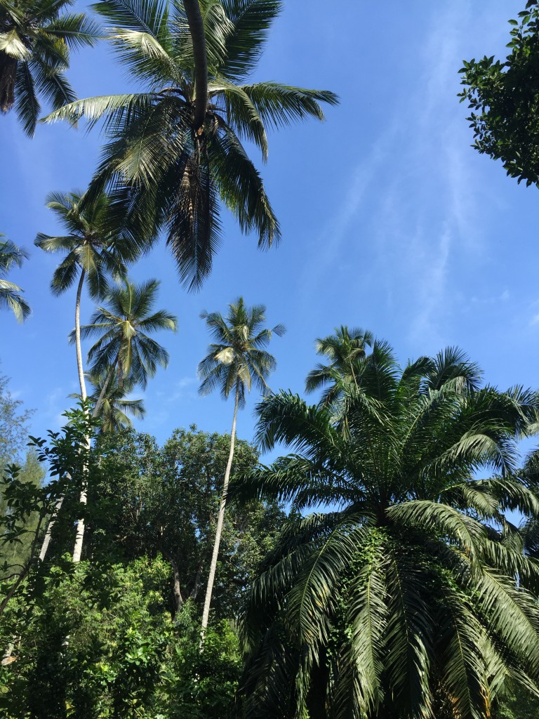 coconut palm and 2?