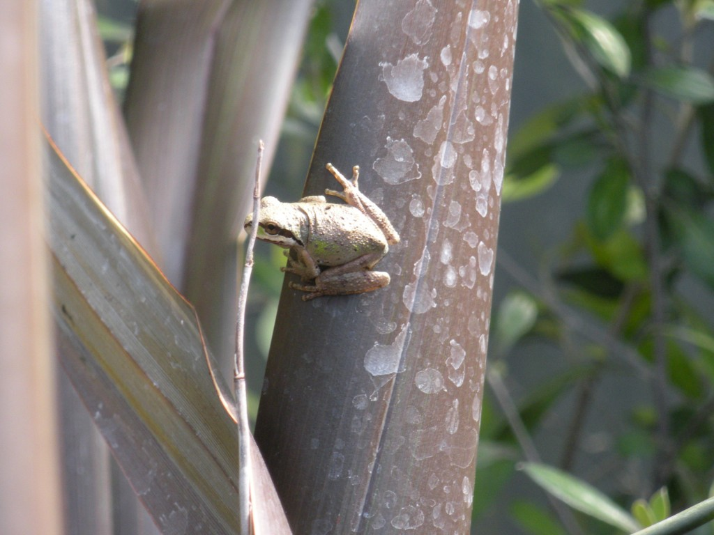 during a 2010 visit, I did manage to catch a shot of a frog.