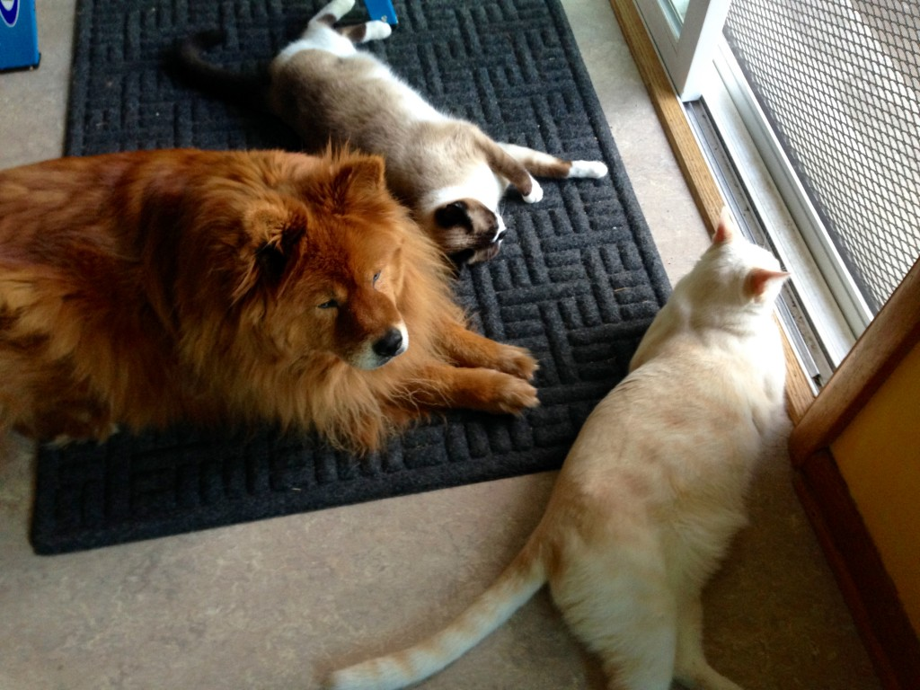 Posy Etta James, Pumpkin, and Mister Kitty.
